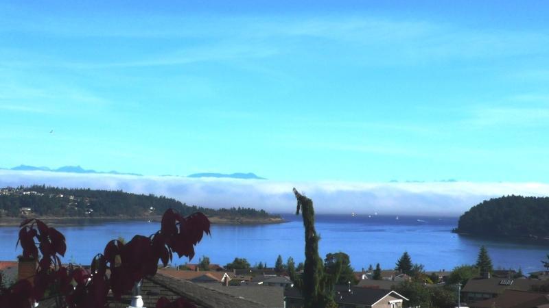 Spectacular fog