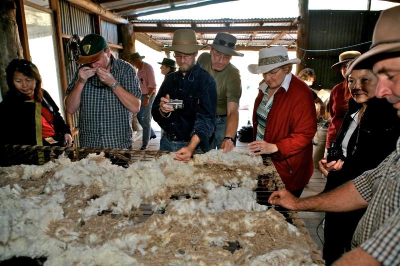 inspecting the fleece