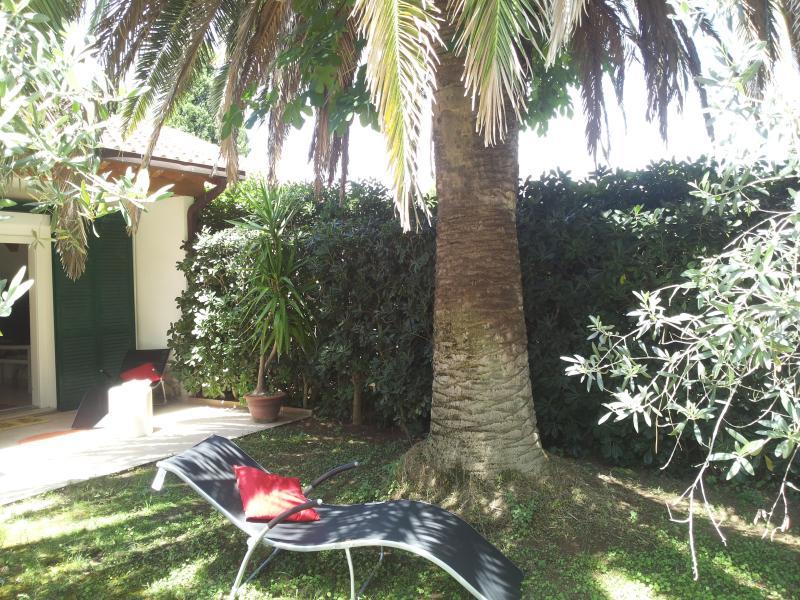 All'ombra della palma...e morte al Punteruolo rosso!!!