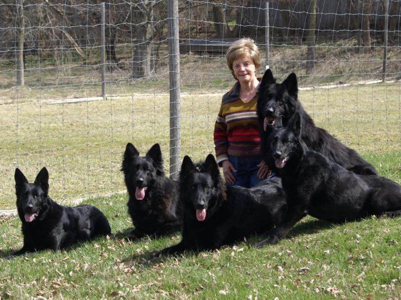 resident pets.  black German Shepherd dogs