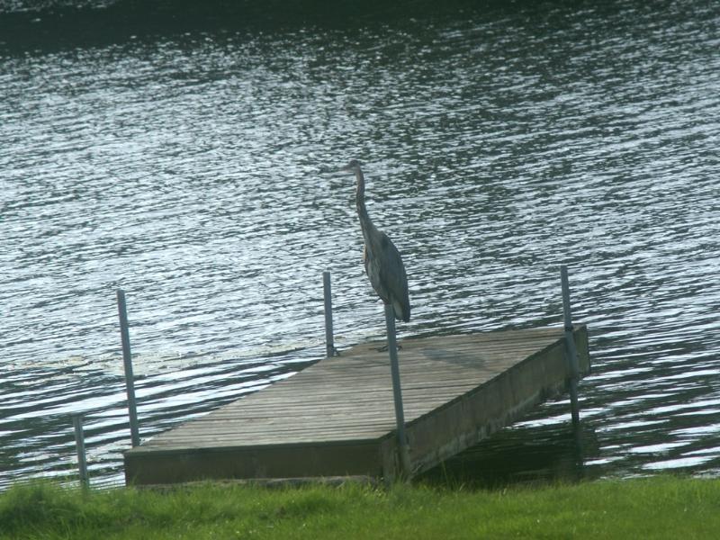 Liftlock B&B dock, crane visiting