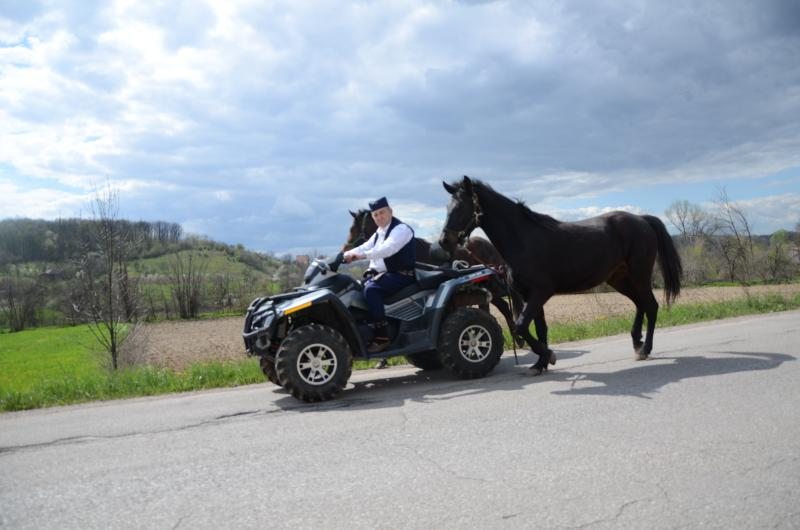 Available horses for riding and ATV