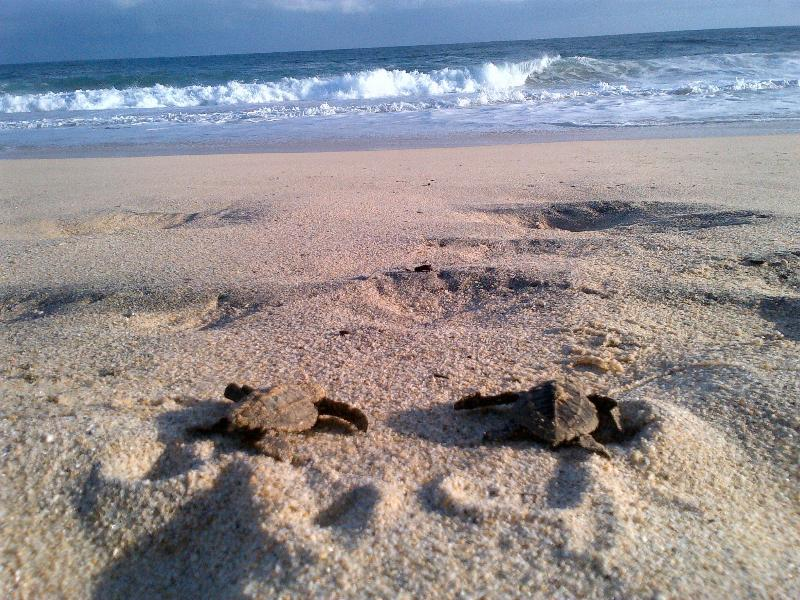 this is the place born the turtles, on season you can help them to find they way to the sea.