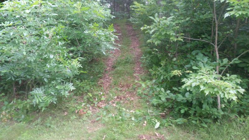 Pista principal até a colina do Logan na floresta