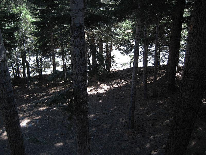 View of Forest from Balcony