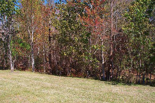 Back yard - zone de conservation de Shingle Creek