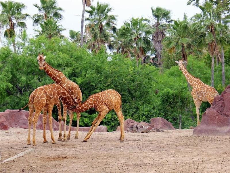 Visit the world class Gladys Porter Zoo, 27 miles away in Brownsville.
