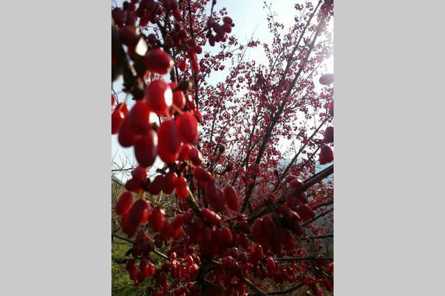 Take photos of spectacular flora on the mountain.