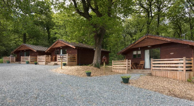 Our woodland lodges located lakeside