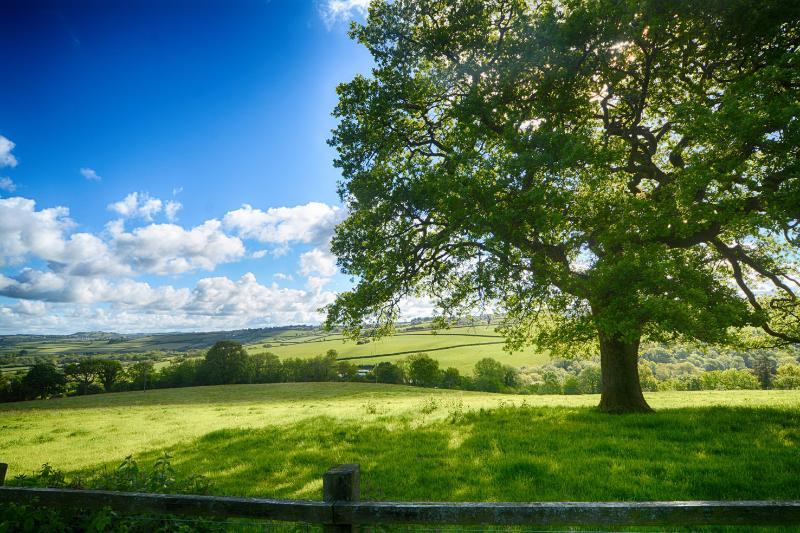 The oak tree.