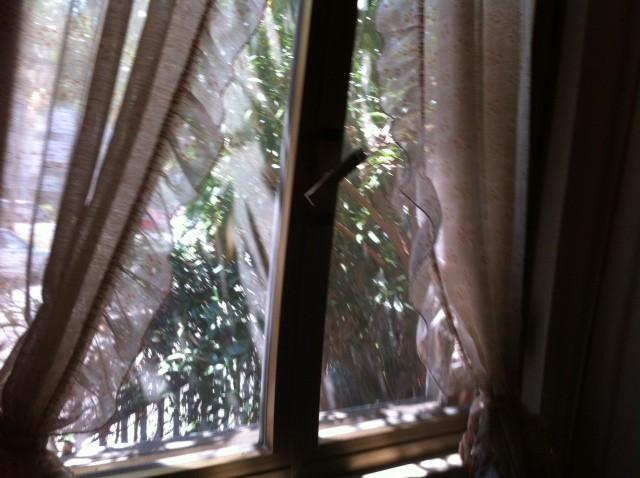 window camerina