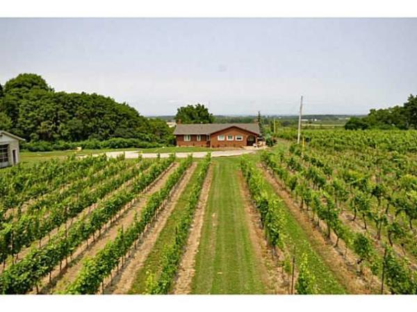 Beamsville Bench Vineyard Cottage on Wine Route, Ferienwohnung in Beamsville