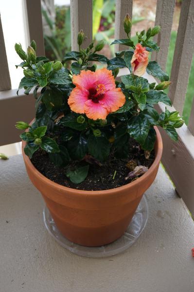 Schöne tropische Blumen überall