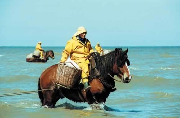 SCHRIMP FISHERMAN ON HORSEBACK