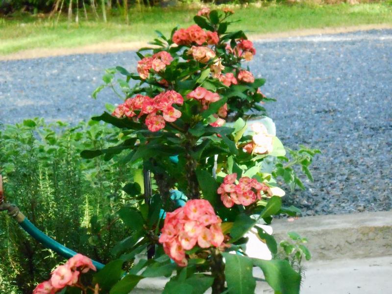 Jardín flor