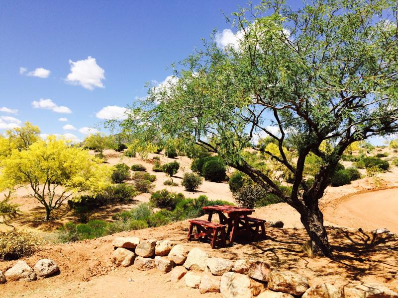 Have a picnic under the palo verde
