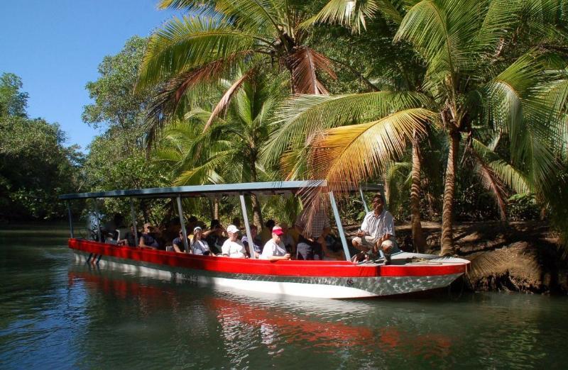 Mangrove tour in the Damas Estuary.