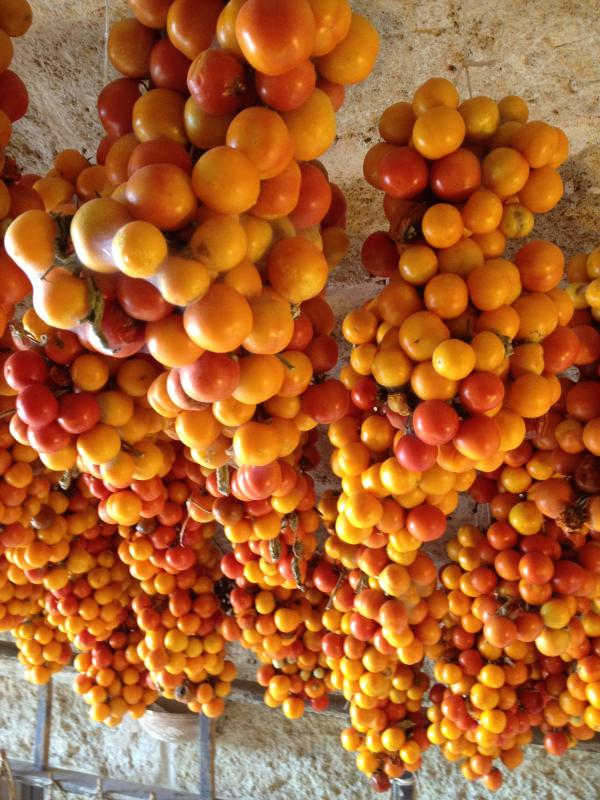 The ' pendule ' yellow tomatoes for winter-typical for the frisellle sauce with olive oil