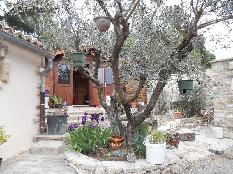 in one of the gardens the olive tree behind a cottage where my mate Leo plays guitar