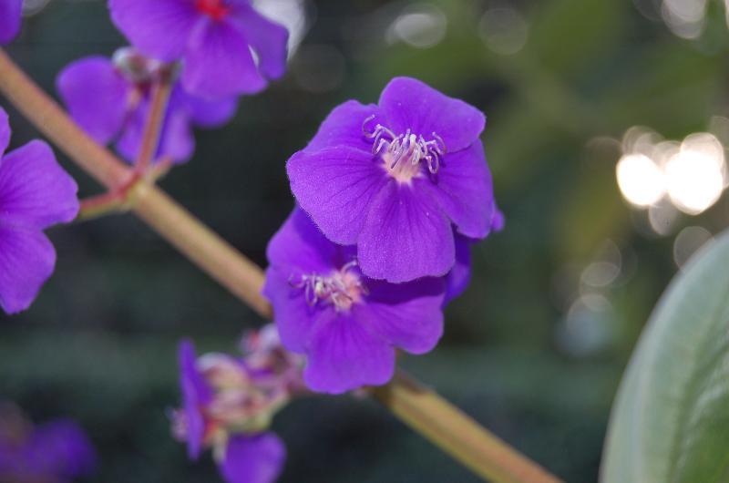 Viele schöne Pflanzen und Blumen auf dem Grundstück