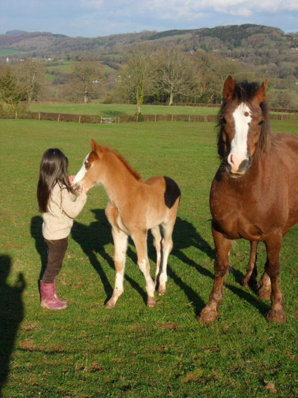New Arrivals at Little Wern Farm