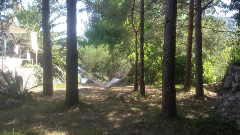 rede do lado de casa, debaixo das árvores de pinho
