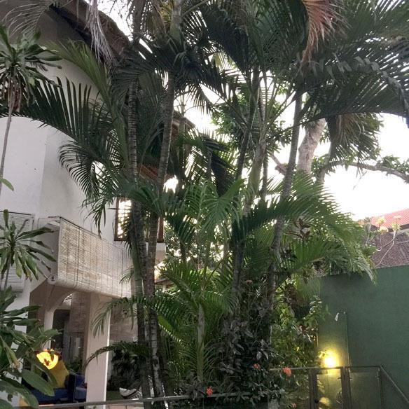 Mangoo tree, palm trees,  bougainvillea trees, frangipani trees, hibiscus flowers...tropical bliss