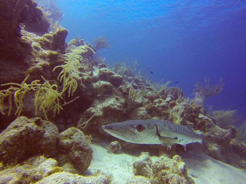 Fotos submarinas de Cayo Sal.