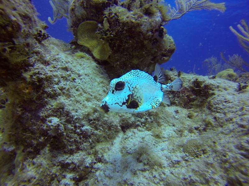 Más vida marina en los arrecifes de Cayo Sal.