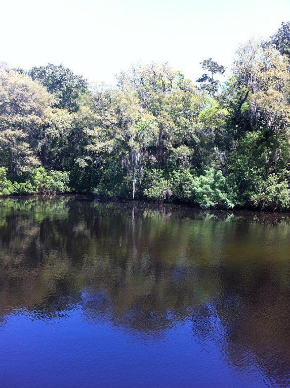 Ver la vida silvestre o el pescado en nuestra pesca y lanzamiento de estanque