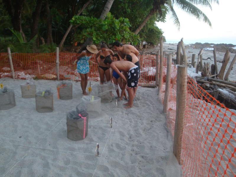 Turtle hatching Montezuma beach
