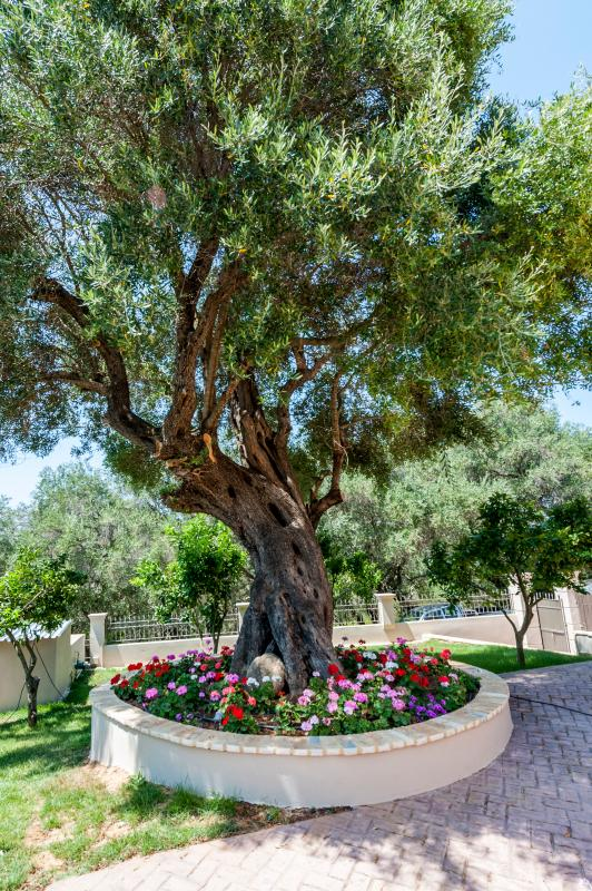 Relax under the shade of an old olive tree
