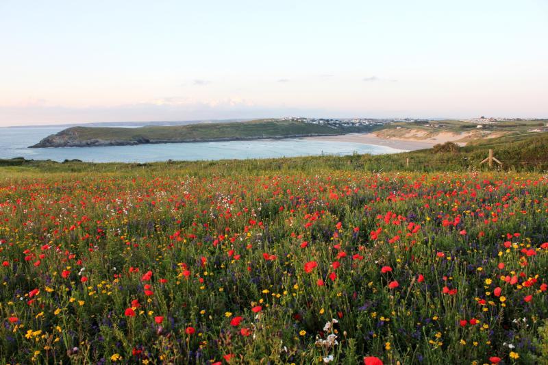 Poppy Fields, Crantock Headland, with unspoilt, dog friendly, Crantock Beach in the background.