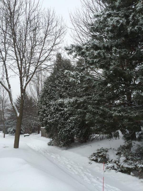 Grapje! Dit is Wisconsin in de winter. Gegarandeerd geld terug als dit in Fiji gebeurt