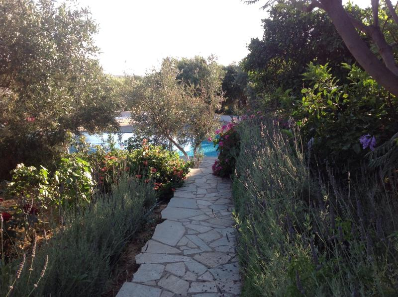 Lavender lined pathway to the stunning pool