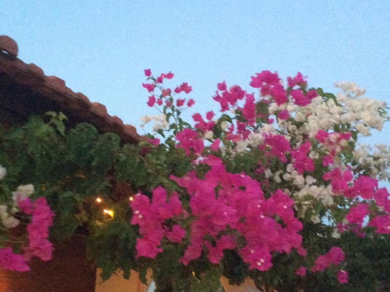 Bugamviglias and blue sky