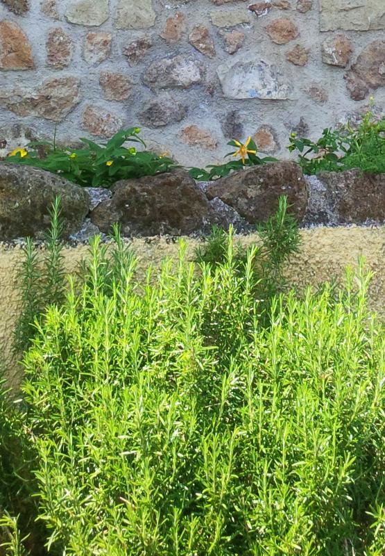 Zona esterna, ingresso autonomo e piante aromatiche