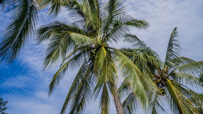 Palmen die zwaaiend in de tuin