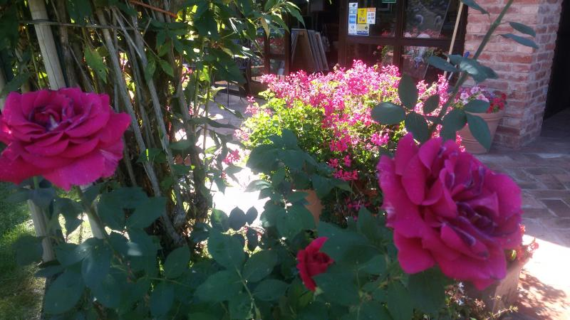 Garten der Rosen