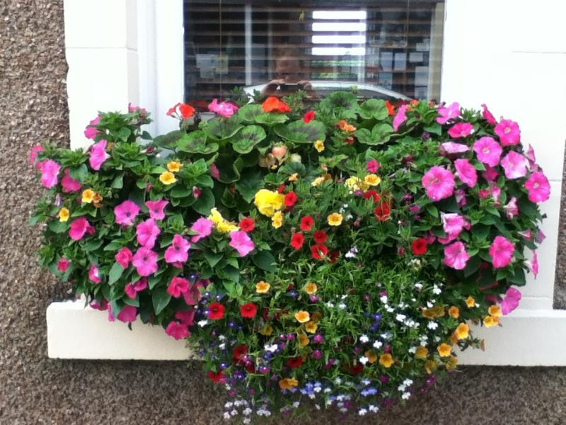 One of our 2015 window boxes