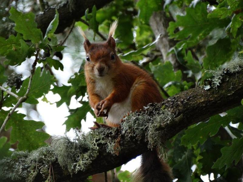 Red squirrel on nearby Brownsea Island