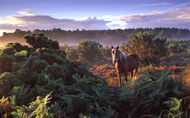 New Forest only a 20 minute drive away