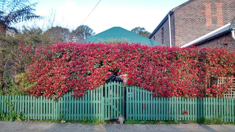 Street view of the cottage. Beautiful hedge ensuring total privacy