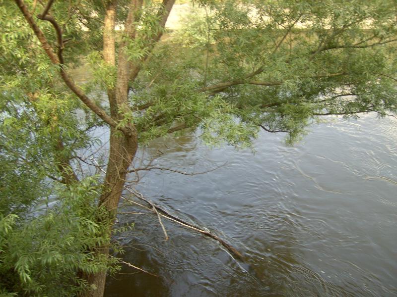 Seeking the trout.