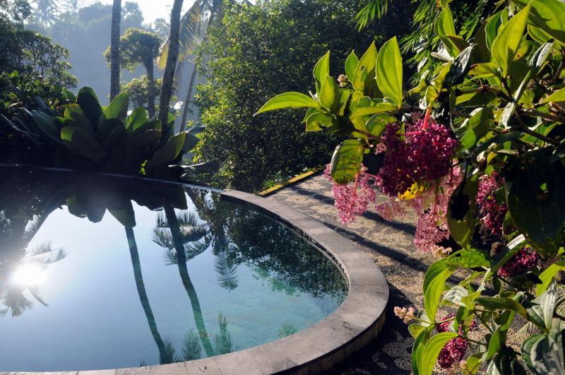 garden, beautiful plants around