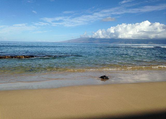 Hale Kai #120 - Your Home by the Sea in West Maui, holiday rental in Lahaina
