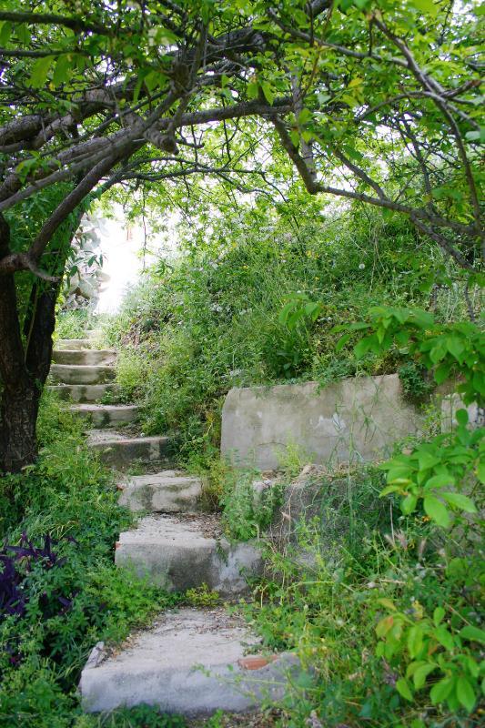 Escalera que da acceso a la huerta