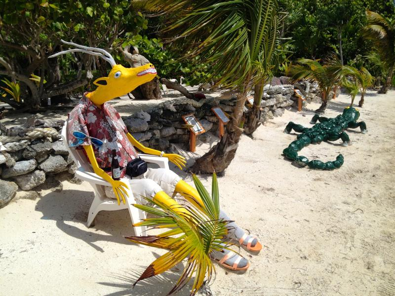 Just one of our neighbors on the beach in Belize!
