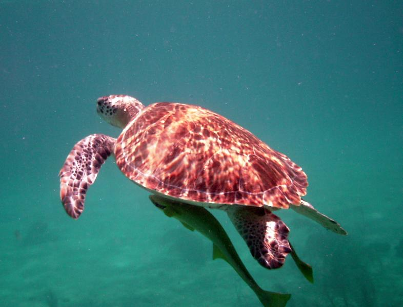 There are turtles and colorful fish in our bay. Enjoy, but stay off the coral:  Stand on the sand