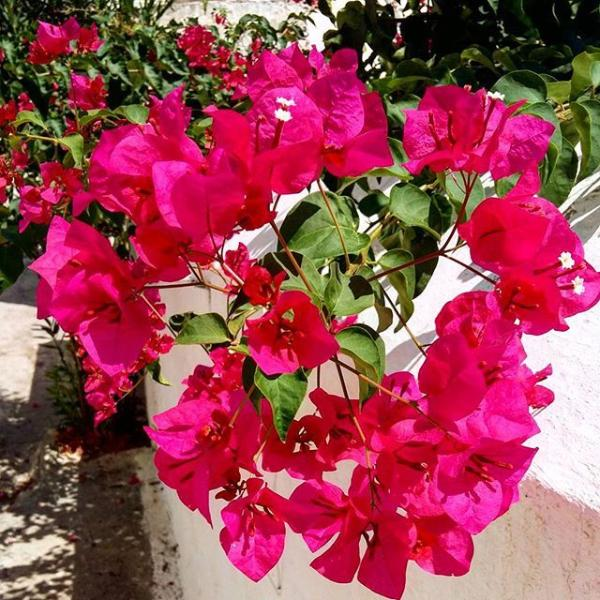 Colourful flowers in Ermioni